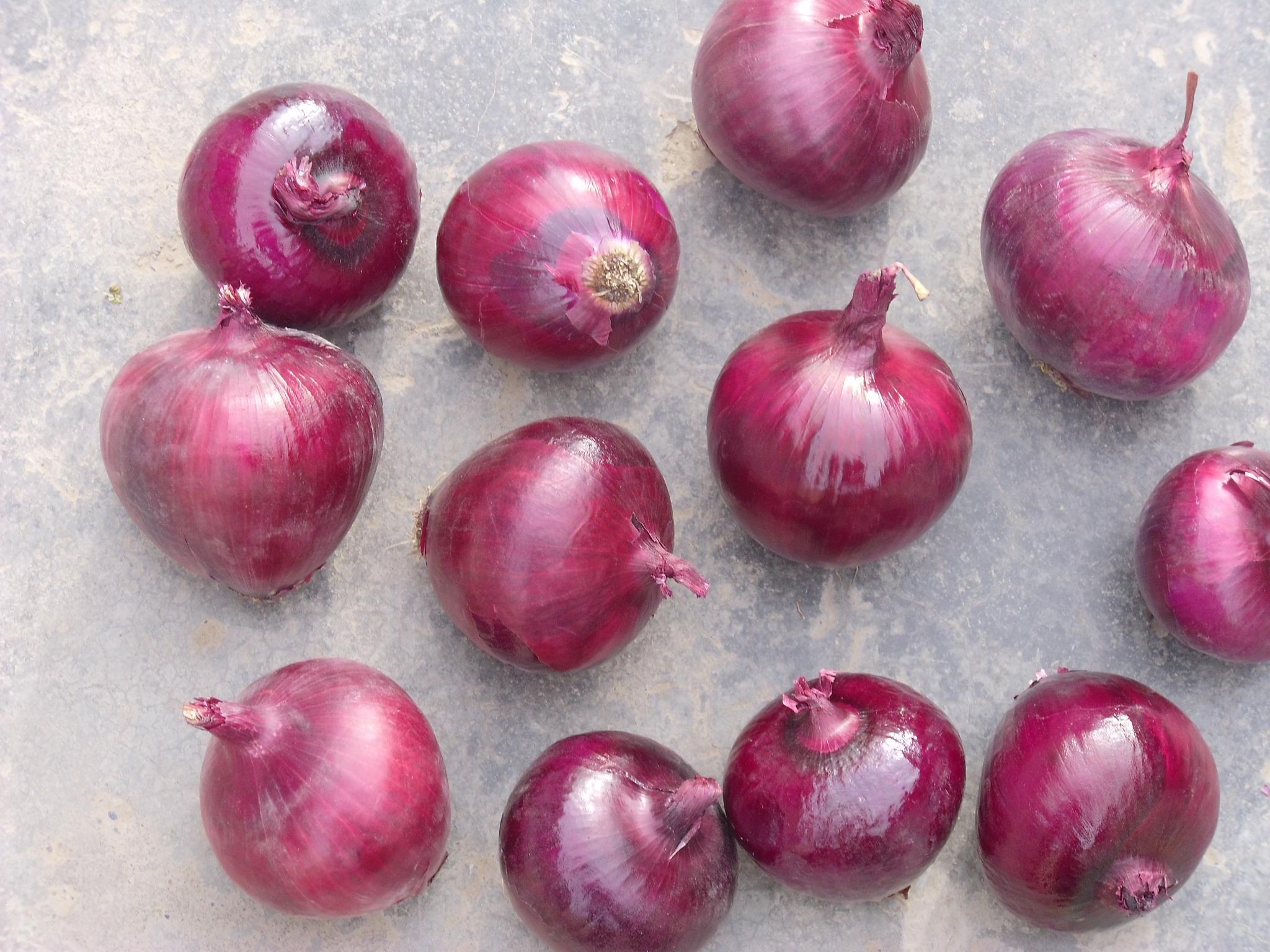 Onion 3