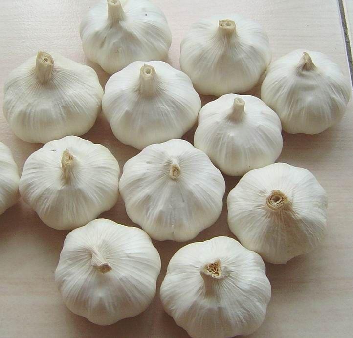 Chinese White Garlic 13
