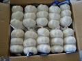 Chinese White Garlic 9