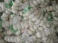 Chinese White Garlic 8