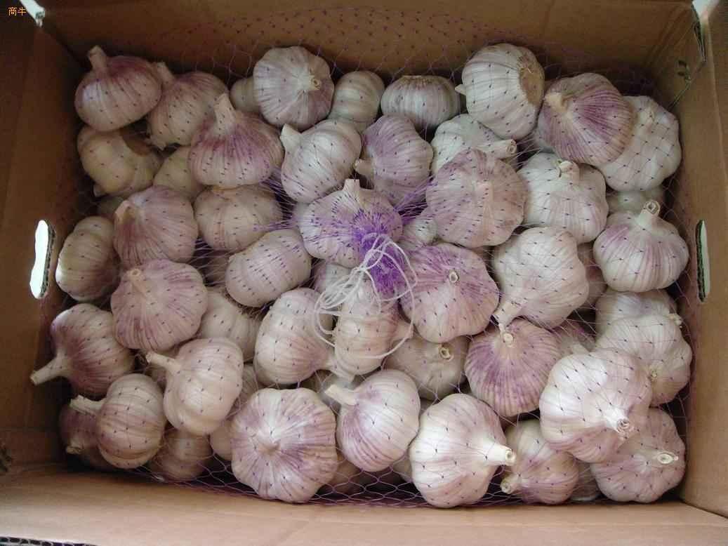 Chinese White Garlic 6