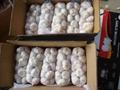 Chinese White Garlic 5