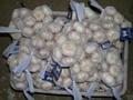 Chinese White Garlic 1
