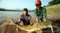 floating fish feed machine  5