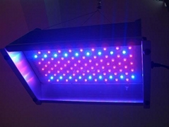 100w NEW led grow light