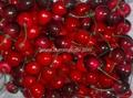Cherry model, decorative fruits, props Fruit