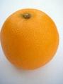 橙子模型 1