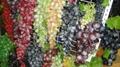 葡萄模型、仿真葡萄、道具葡萄 3