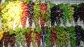 葡萄模型、仿真葡萄、道具葡萄 8