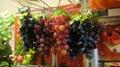 葡萄模型、仿真葡萄、道具葡萄 7