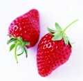 Strawberry models, decorative fruits, props Fruit