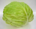 Simulation vegetables(cabbage) 1