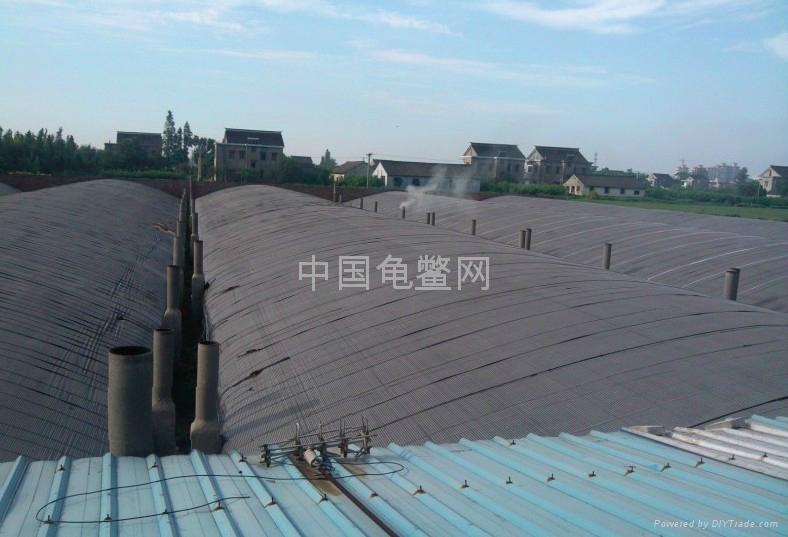 浙江温室养鳖 汤汤 摄