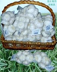 Fresh Garlic (Click)