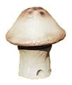 HDS-15B仿真蘑菇音箱