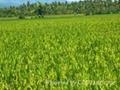soil improvement 2