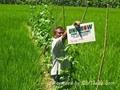 soil improvement 3