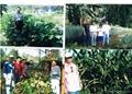 bio organic fertilizer 2
