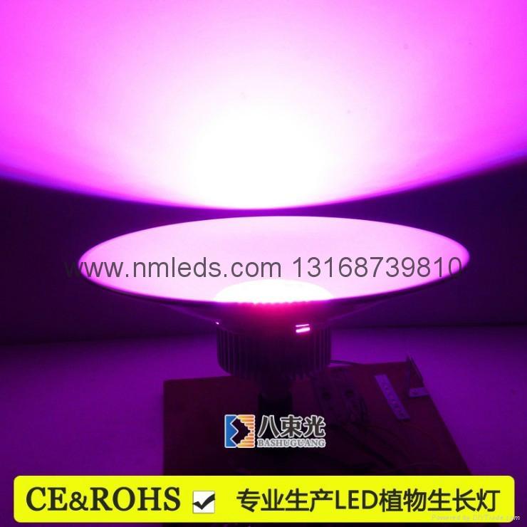 戶外LED植物生長燈 5