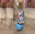 leather horse halter  resin horse trophy  sports medicine boots