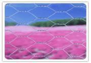 hexagongal wire mesh