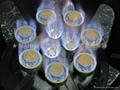 NP12A   雙管12頭天然氣噴火爐 2