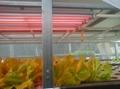 Plant Grow Tubes
