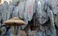 假山塑石水泥雕塑 3