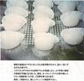 Automatic Shrimp Dumpling Machine  NEW