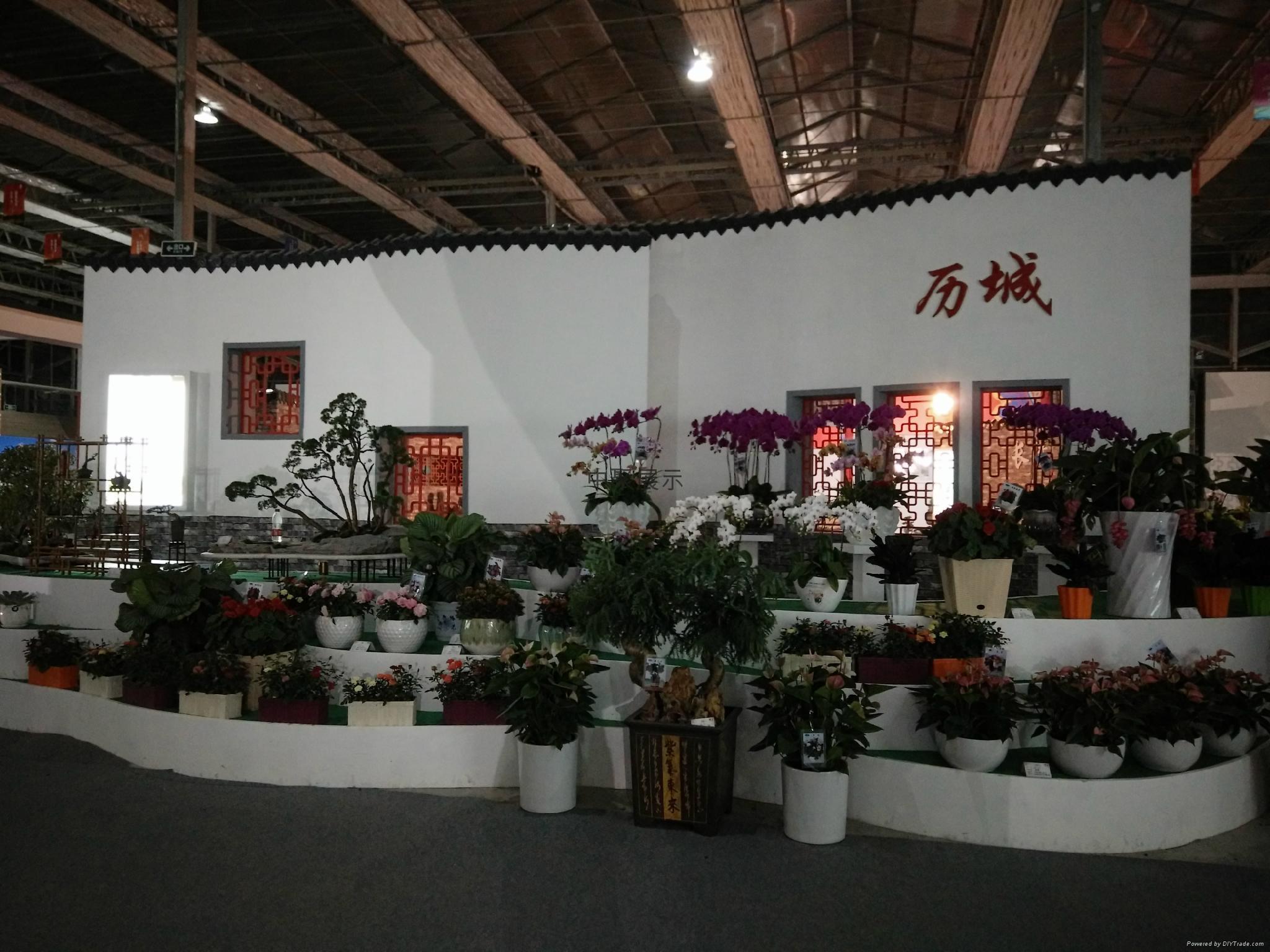 花卉展 5