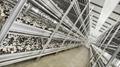 Aluminum mushroom shelves