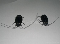 solar power Crotonbug
