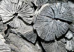 栎木菊花炭
