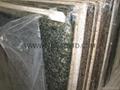 Yellow Beige Granite Sunset Gold Desert Gold Harvest Gold G682 countertops  4