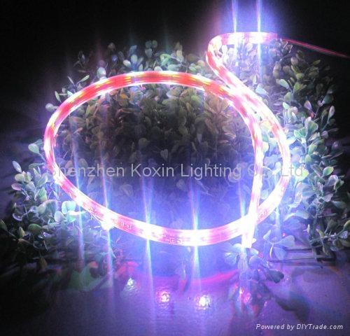SMD5050 150顆燈一卷的柔性軟光條 4