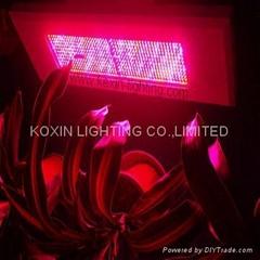 300W LED 植物生长灯