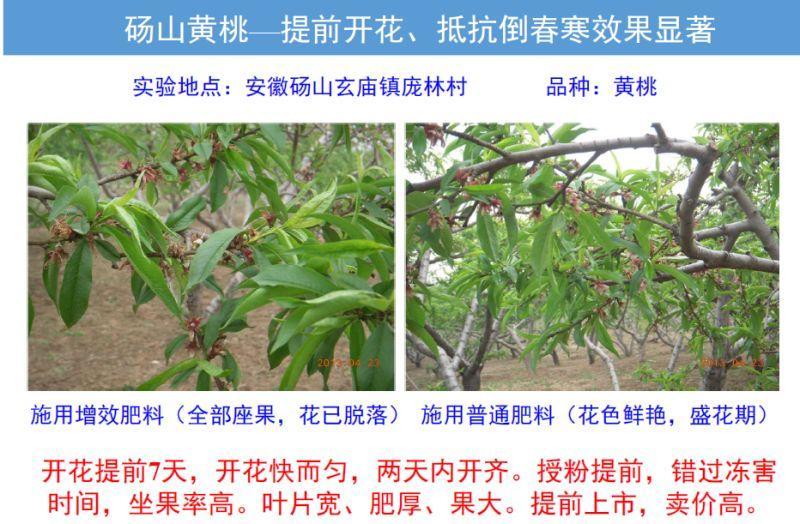聚谷氨酸肥料 2