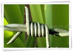 barbed razor wire 5