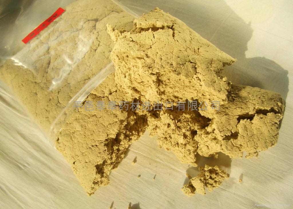 golden moxa  1