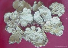 rhizoma ligustici wallichii