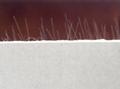 紙面石膏板 5