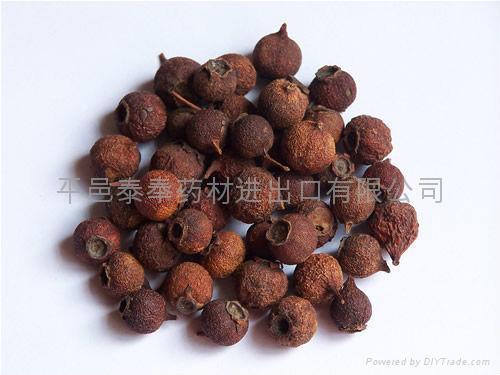 Hawthorn Fruit 1