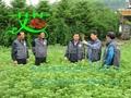 Artemisia Floss  5