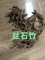 丝石竹 1