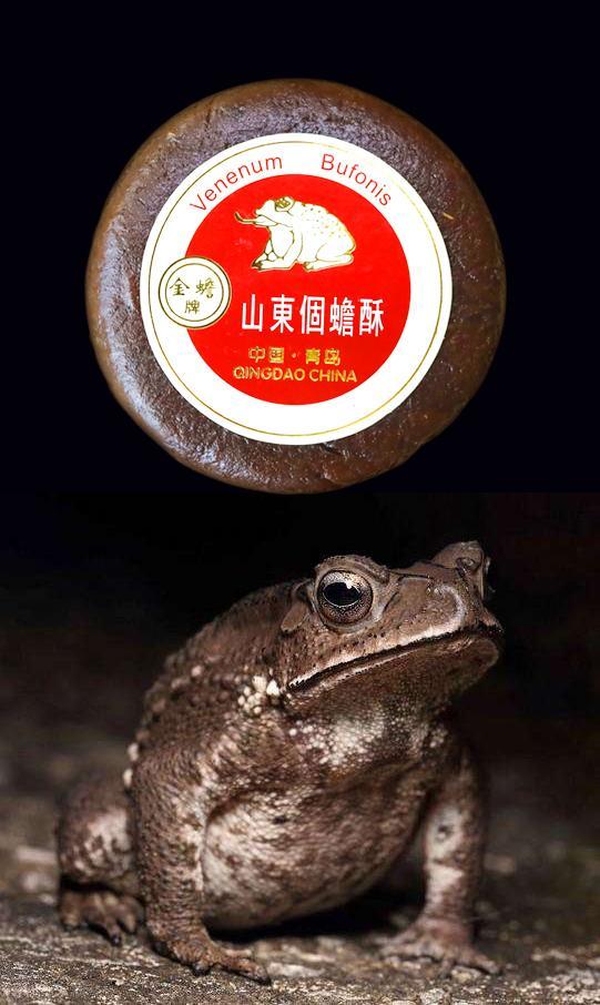 Toad Venom(venenum bufonis) 17