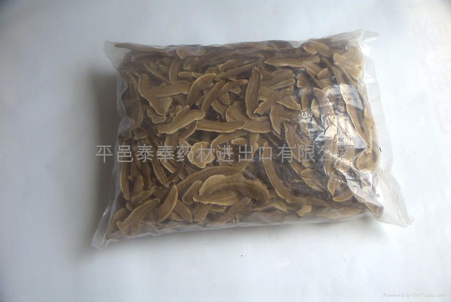 Lucid ganoderma slices 2