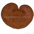 Lucid ganoderma slices