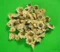 Florists Chrysanthemum  3