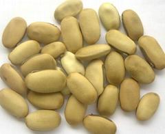大奶白刀豆