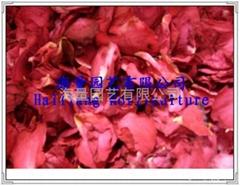 玫瑰干花供应